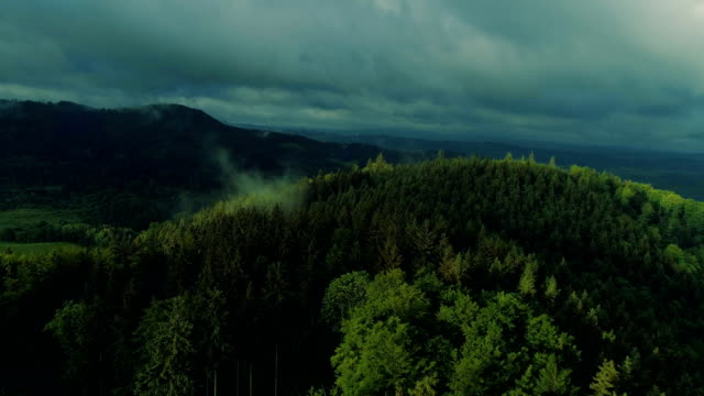 aerial view of the summer forest - maple tree stock videos and b-roll footage