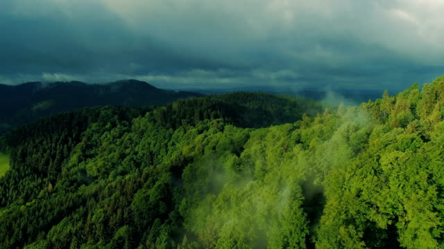 aerial view of the summer forest - poland stock videos & royalty-free footage