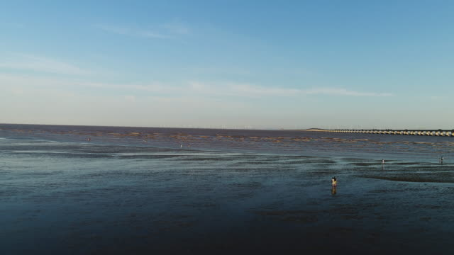 aerial view of the tidal flats - low stock videos and b-roll footage