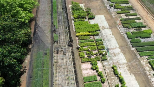 aerial view of the tree nursery of the instituto terra at the beginning of the raining season on november 22, 2019 in aimorés, brazil. twenty years... - planting stock videos & royalty-free footage