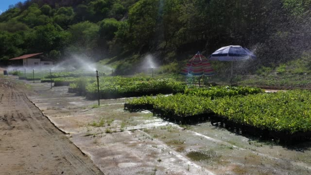 aerial view of the tree nursery of the instituto terra at the beginning of the raining season on november 22, 2019 in aimorés, brazil. twenty years... - rainforest stock videos & royalty-free footage