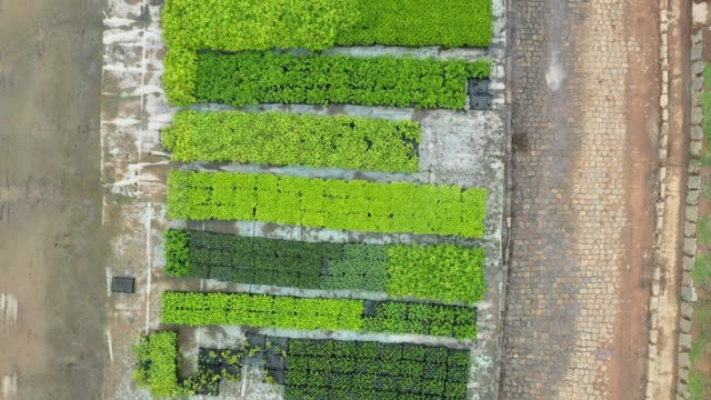 aerial view of the tree nursery of the instituto terra at the beginning of the raining season on november 21, 2019 in aimorés, brazil. twenty years... - tree stock videos & royalty-free footage