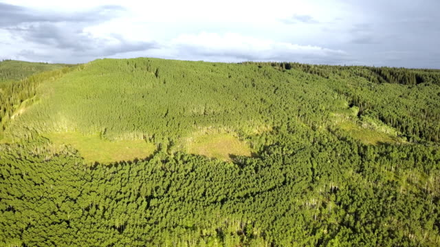 aerial view of the vast forest of western colorado - aspen tree stock videos & royalty-free footage