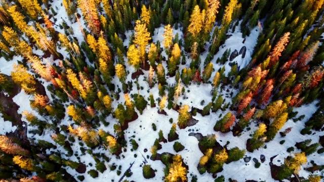 vidéos et rushes de 4k heli: vue aérienne du parc national de yosemite - pin