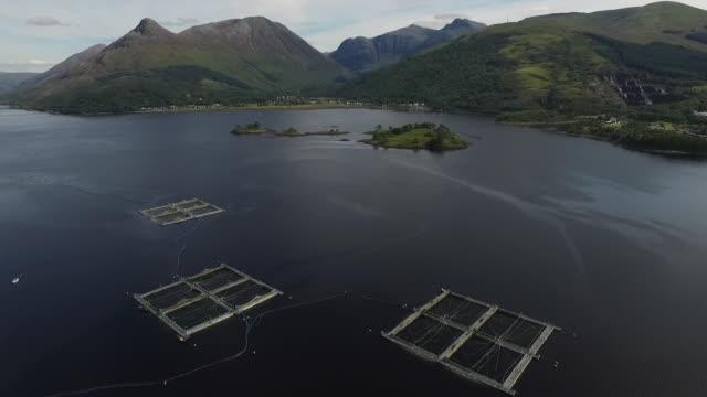 vídeos de stock, filmes e b-roll de aerial view of three salmon fishing platforms - indústria da pesca