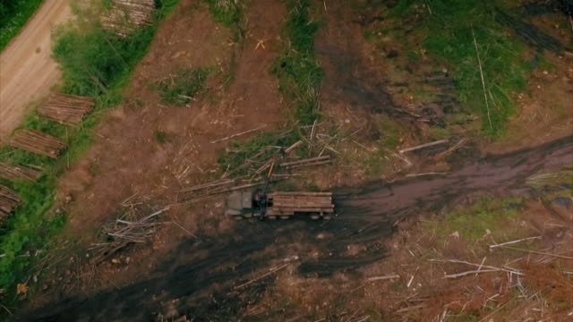 aerial view of timber logging in western russia. - industria forestale video stock e b–roll