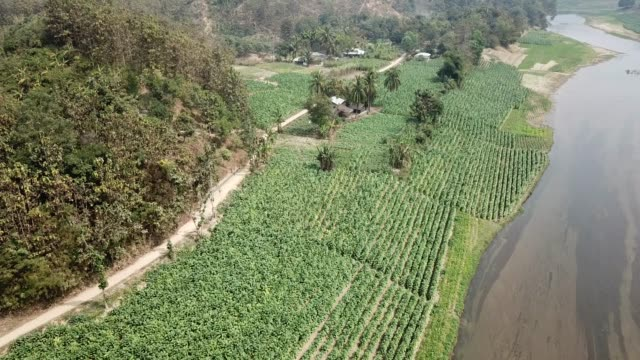 Aerial view of Tobacco crop field in Bangladesh Tobacco cultivation in Bandarban hill district of Bangladesh raises hackles as some companies are...