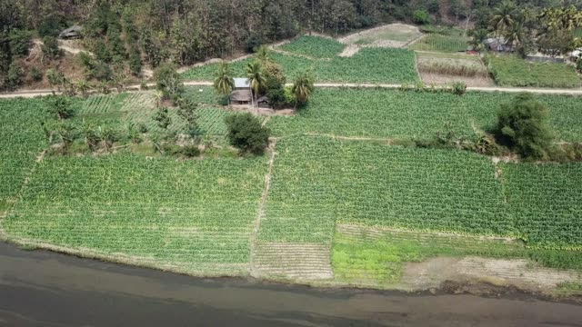 aerial view of tobacco crop field in bangladesh. tobacco cultivation in bandarban hill district of bangladesh raises hackles as some companies are... - プランテーション点の映像素材/bロール
