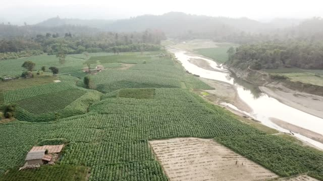 aerial view of tobacco crop field in bangladesh. tobacco cultivation in bandarban hill district of bangladesh raises hackles as some companies are... - gourd stock videos & royalty-free footage
