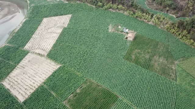 aerial view of tobacco crop field in bangladesh. tobacco cultivation in bandarban hill district of bangladesh raises hackles as some companies are... - tobacco crop stock videos & royalty-free footage