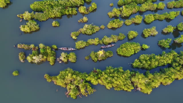 aerial view of tourist boats in mangroves, munroe backwaters - backwater stock videos & royalty-free footage