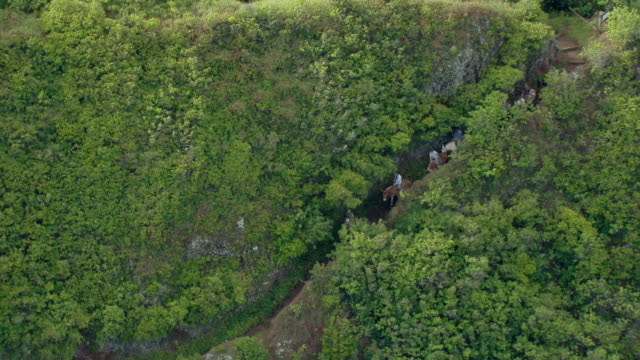 aerial view of tourists on guided mule tour through steep mountains of molokai, hawaii. - recreational horse riding stock videos & royalty-free footage