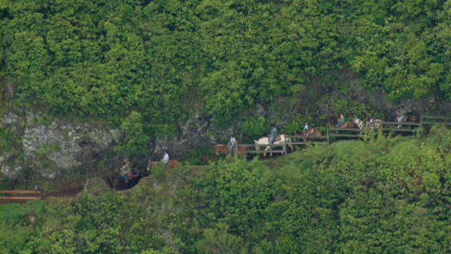 Aerial view of tourists riding mules down a steep mountain trail in Molokai, Hawaii.
