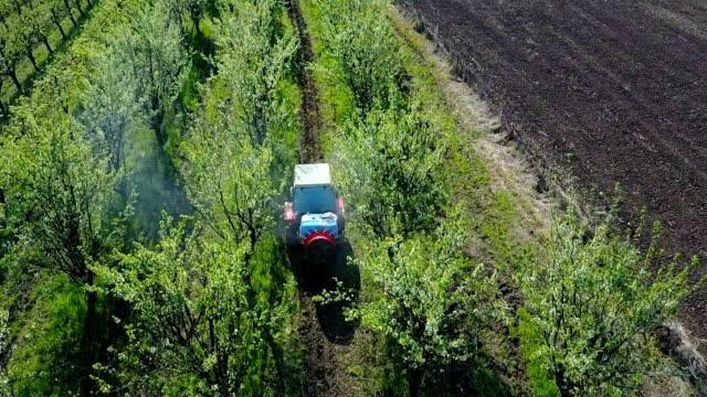 Aerial view of tractor spraying plum trees