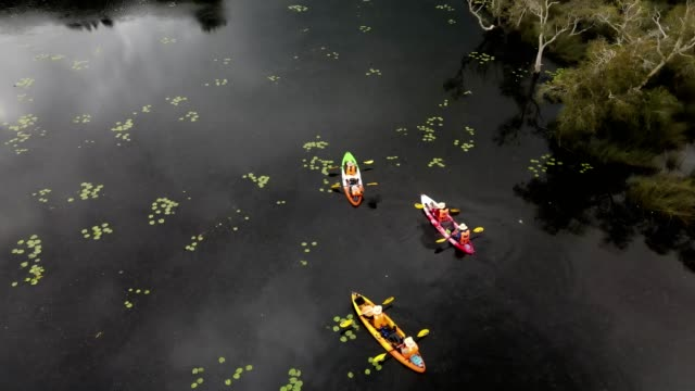 aerial view of travel kayaking, teen group canoe kayak in peat swamp forest wetlands in morning time - kayaking stock videos & royalty-free footage