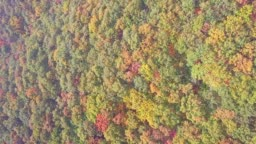 Aerial view of tree in Autumn of South Korea