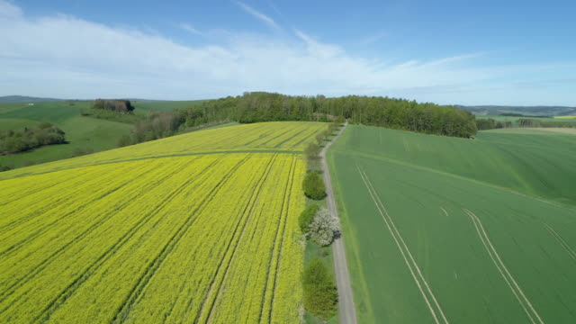 aerial view of tree lined rural road through landscape with agricultural fields (green fields and oilseed rape field), springtime. - accessibility stock videos & royalty-free footage