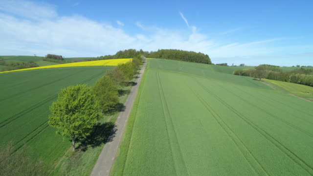 stockvideo's en b-roll-footage met aerial view of tree lined rural road through landscape with agricultural fields, springtime. - monocultuur