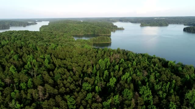 Aerial view of trees at a lake in Hartwell Georgia