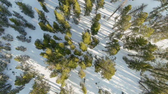 aerial view of trees by drone on a snow covered mountain. - zoom out stock videos & royalty-free footage