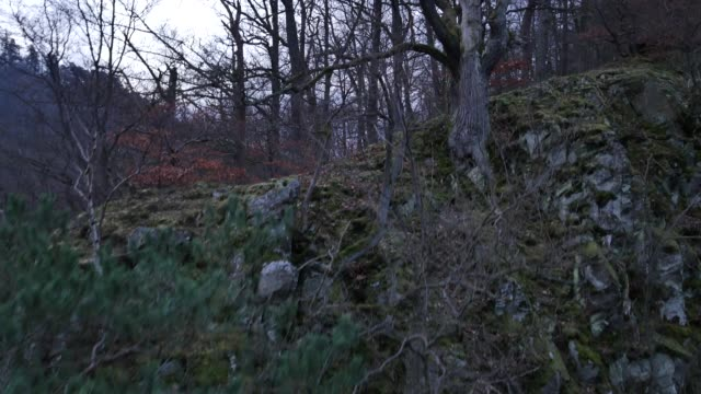 aerial view of trees growing out of rocky cliff - bare tree stock videos & royalty-free footage