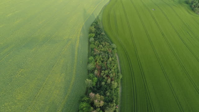 aerial view of trees standing between green agricultural fields. saale-orla-kreis, thuringia, germany, europe. - turingia video stock e b–roll