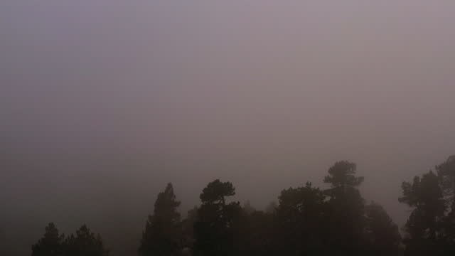 aerial view of treetops hidden in shadow and covered by a thick layer of grey fog. - wilderness stock videos & royalty-free footage