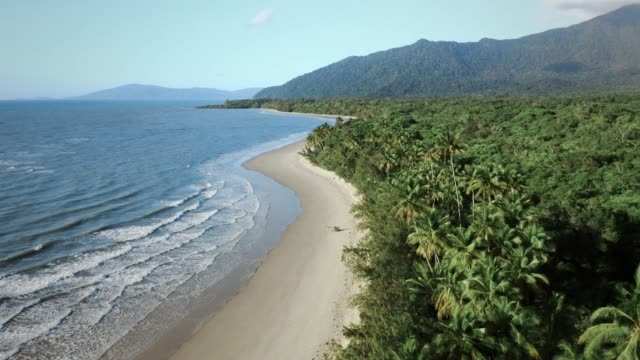 aerial view of tropical daintree rainforest - regenwald stock-videos und b-roll-filmmaterial