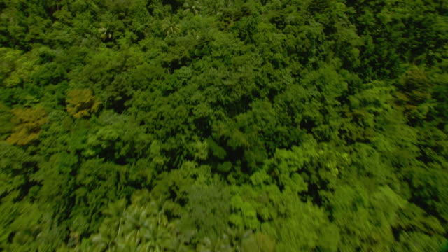 Aerial view of tropical forest on the Dominica coastline near the village of Petite Soufriere.