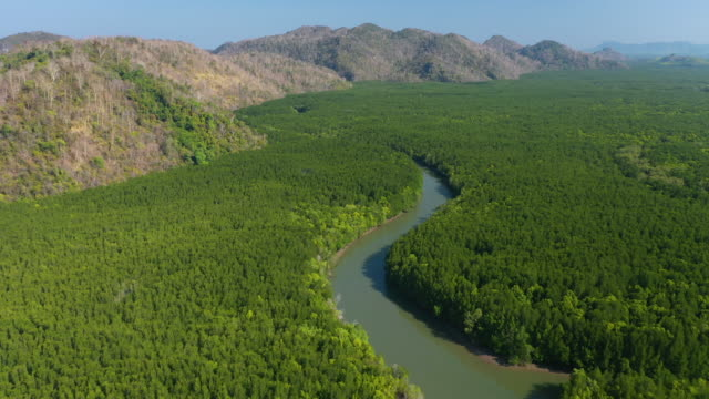 aerial view of tropical rainforest and many river - river stock videos & royalty-free footage