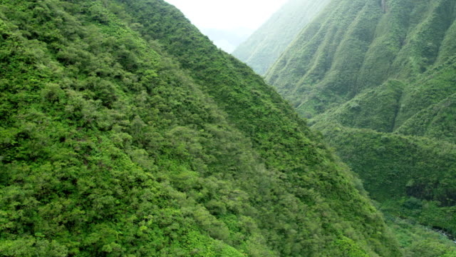 aerial view of tropical rainforest valley foliage maui - polynesian ethnicity stock videos & royalty-free footage