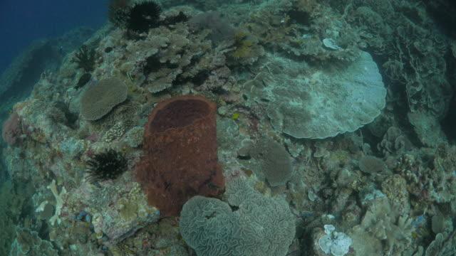 vídeos y material grabado en eventos de stock de vista aérea de arrecifes tropicales con coral y esponja - esponja