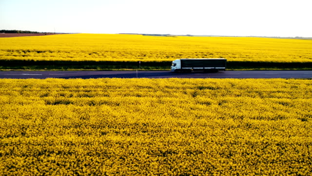 aerial view of truck on  highway  near the yellow field of rapeseed - cargo container stock videos & royalty-free footage