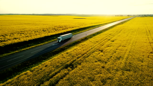 aerial view of truck on  highway  near the yellow field of rapeseed - mezzo di trasporto video stock e b–roll