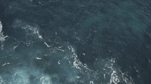 vídeos y material grabado en eventos de stock de vista aérea de tortugas nadando - comunidad global