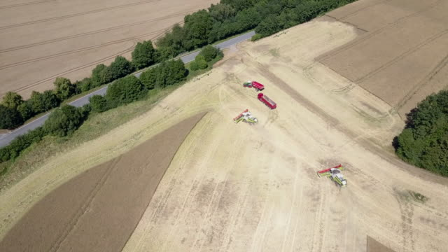 Aerial view of two combine harvesters harvesting a rape field in midsummer in Germany while a tractor with a trailer can be seen too Due to the...