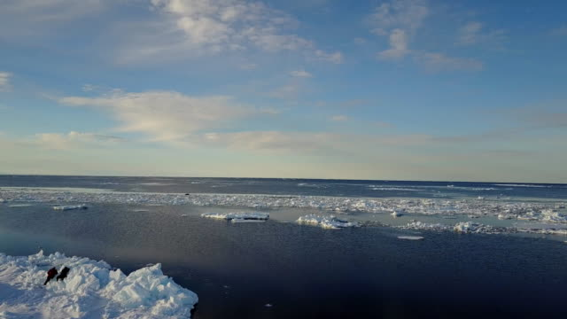 stockvideo's en b-roll-footage met aerial view of two people looking at walruses resting on floating ice in the distance, northern baffin island, canada. - noordelijke grote oceaan