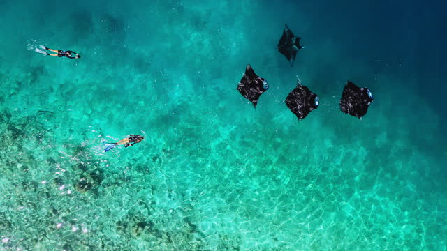 stockvideo's en b-roll-footage met aerial view of two women swimming with manta rays in maldives - vier dieren