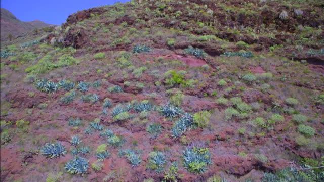luftaufnahme der typischen flora (sukkulente) in der nähe von san sebastián de la gomera auf den kanarischen inseln la gomera - sukkulente stock-videos und b-roll-filmmaterial