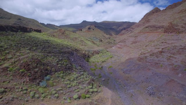 aerial view of typical flora valley near by punta de avalo on canary islands la gomera - succulent stock videos and b-roll footage
