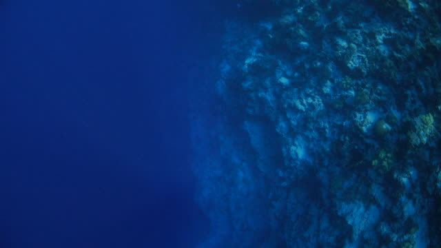 Aerial view of undersea cliff
