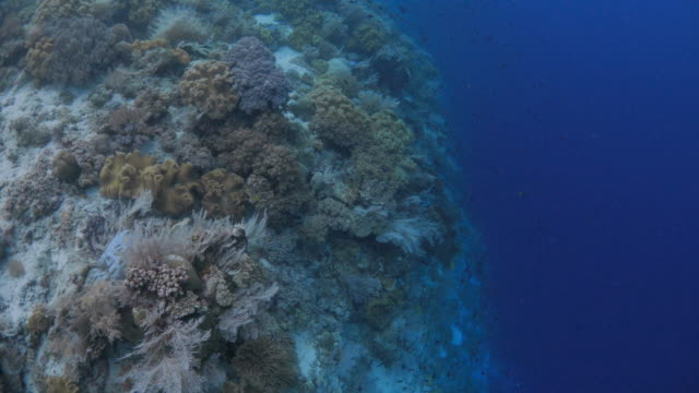 Aerial view of undersea cliff with beautiful coral colony