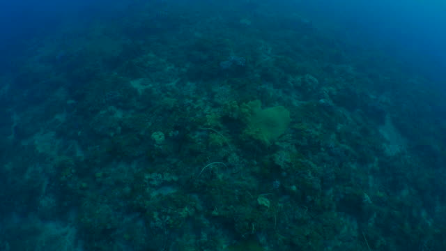 Aerial view of undersea coral reef