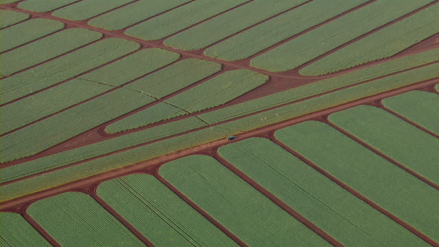 aerial view of vehicle driving on dirt road through farmland near kahuku on the north shore of oahu, hawaii. - turtle bay hawaii stock videos & royalty-free footage