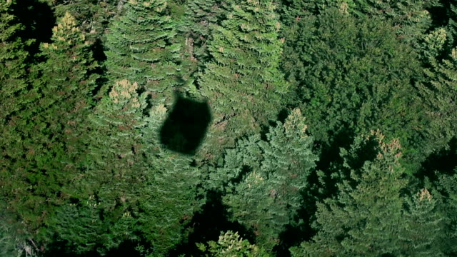 Aerial view of vibrant green forest