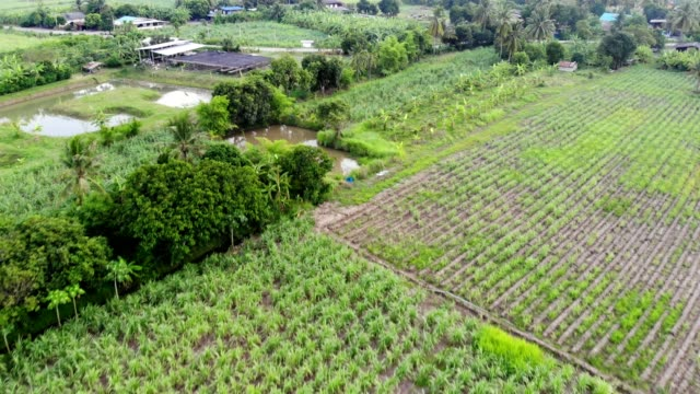 aerial view of village on farming area - sugar cane stock videos & royalty-free footage
