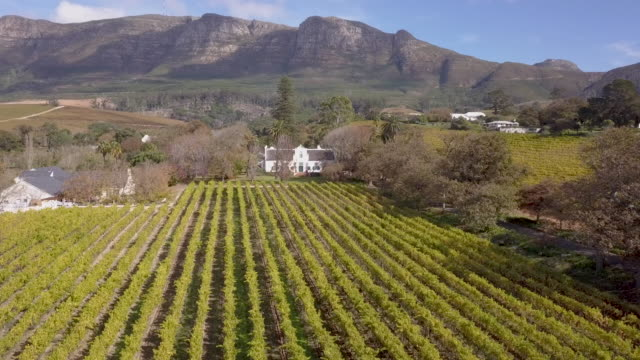 aerial view of vineyard in cape town, south africa - cape town stock videos & royalty-free footage
