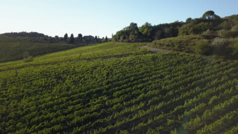 aerial view of vineyard landscape at sunset - italy stock videos & royalty-free footage