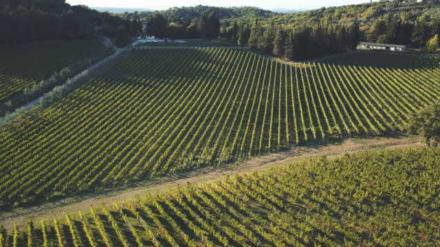 aerial view of vineyard landscape at sunset - vineyard stock videos & royalty-free footage