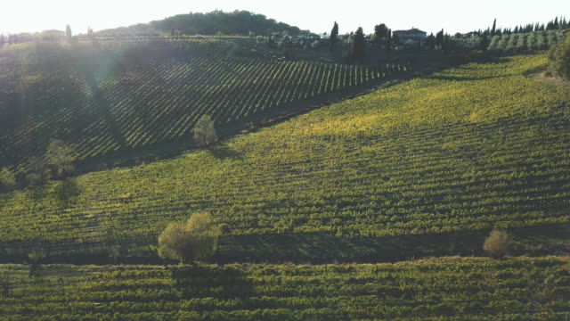 aerial view of vineyard landscape at sunset - collina video stock e b–roll